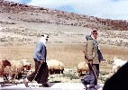 01 Palestinian shepherds in the West Bank, near Bethlehem